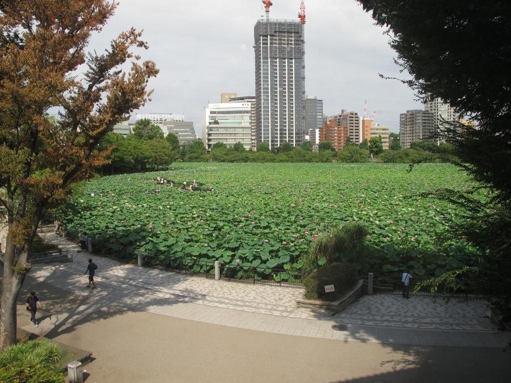 不忍池2(下町風俗資料館公式フェイスブックより)